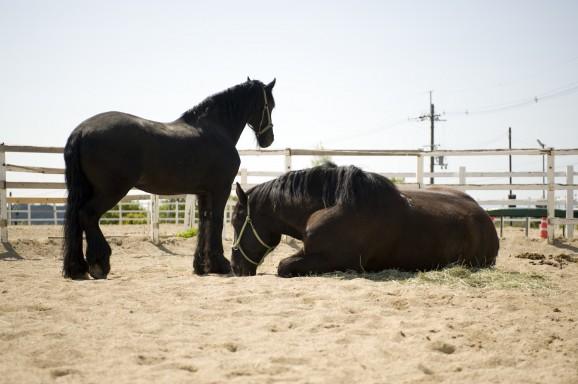 馬にとっても幸せな日々を…